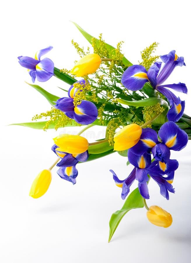 Abstrakt ordning av purpurfärgade iriers, gula tulpan och mimosan på vit bakgrund royaltyfri fotografi