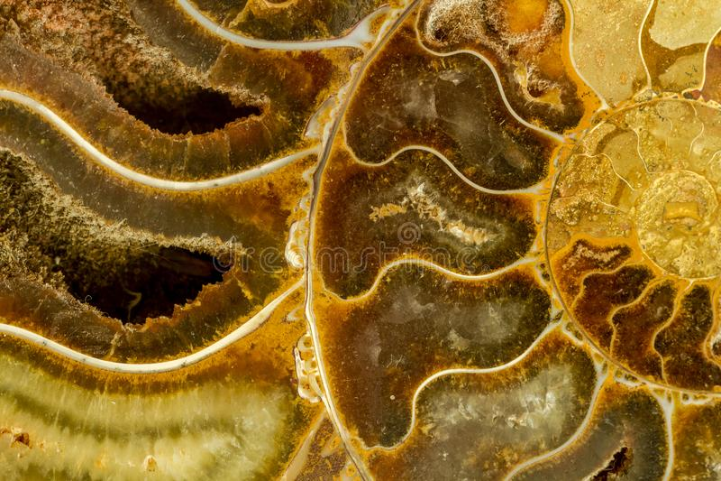 Abstrakt osłupiały amonit fotografia stock