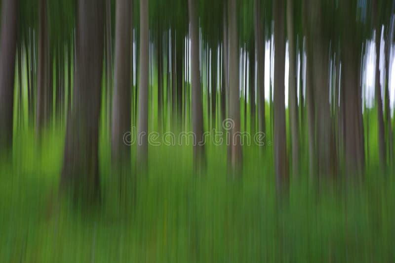 Abstrakt oskarpt sörjer trädskogen arkivbilder