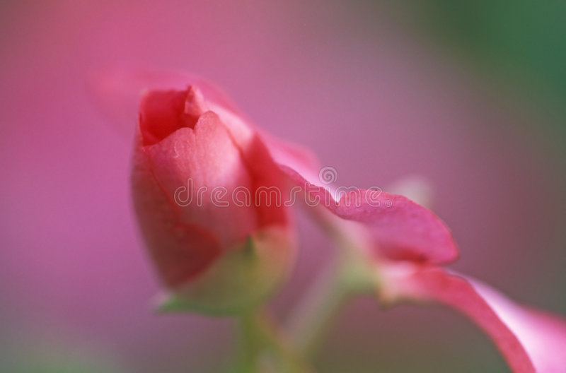 Download Abstrakt pink fotografering för bildbyråer. Bild av fall - 34393