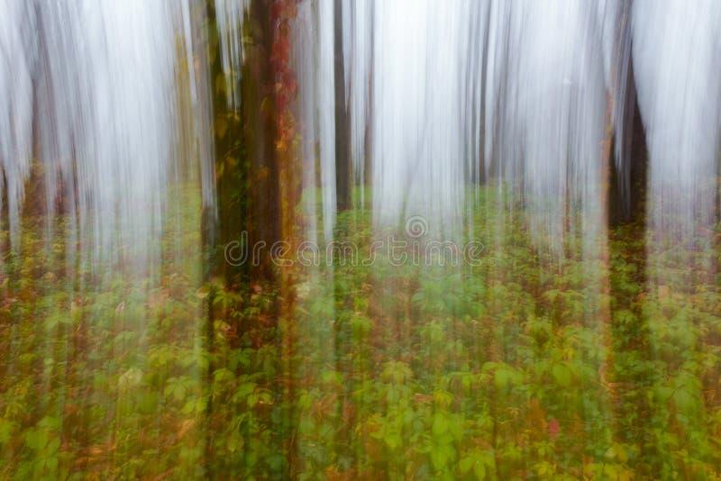 Abstrakt rörelsesuddighet av träd fotografering för bildbyråer