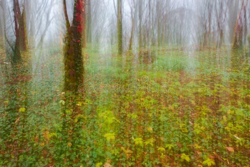 Abstrakt rörelsesuddighet av träd royaltyfri fotografi