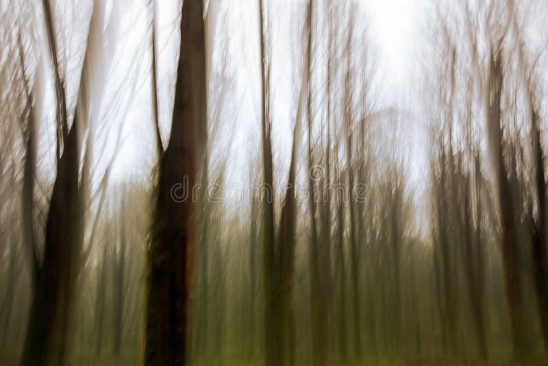 Abstrakt rörelsesuddighet av träd royaltyfria bilder