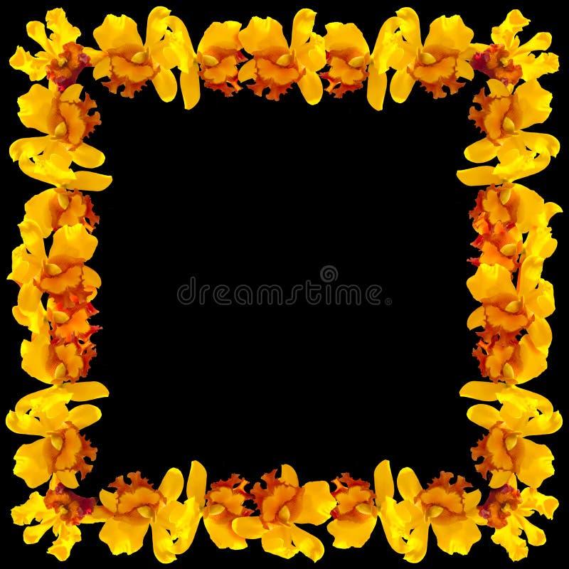 Abstrakt Ramowa Żółta orchidea na czarnym tle ilustracji