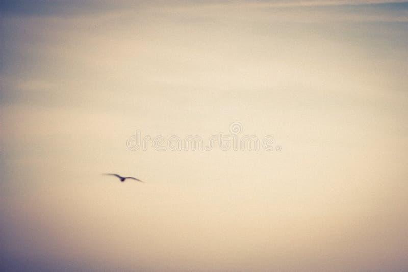 Abstrakt seagull i flykten royaltyfria foton