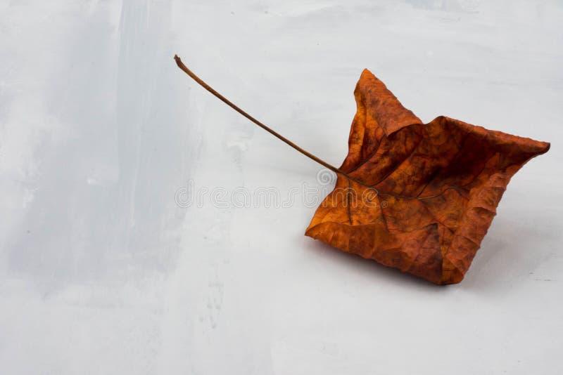 abstrakt set för höstbakgrundsdesign ORANGE NEDGÅNGBLAD PÅ GRÅ BAKGRUND moderiktigt arkivfoto