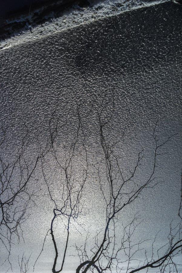 Abstrakt sikt av trädet och is royaltyfria bilder