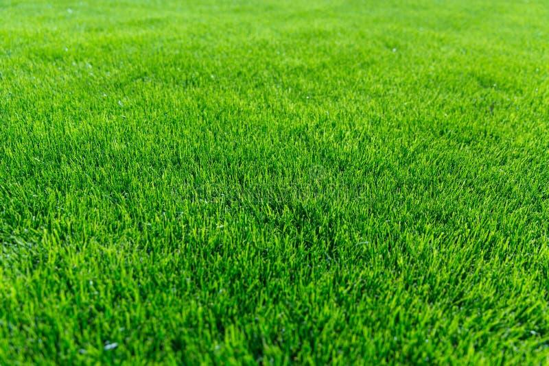 abstrakt sikt för textur för park för lawn för green för bakgrundsstadsgräs