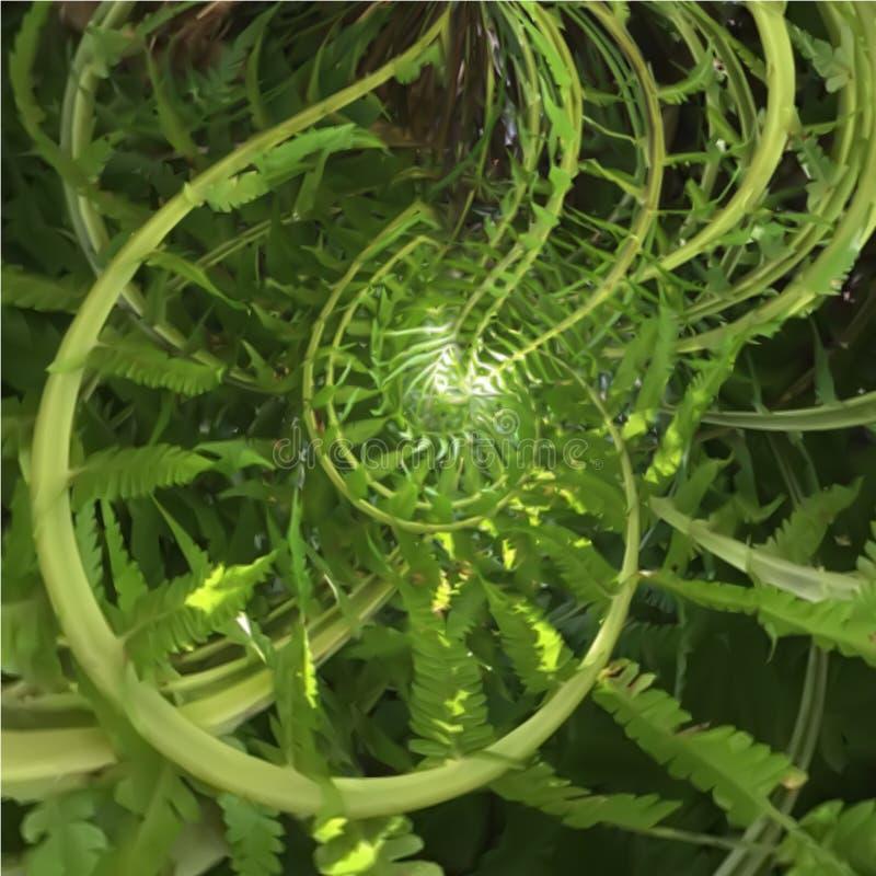 Abstrakt spirala paproć royalty ilustracja