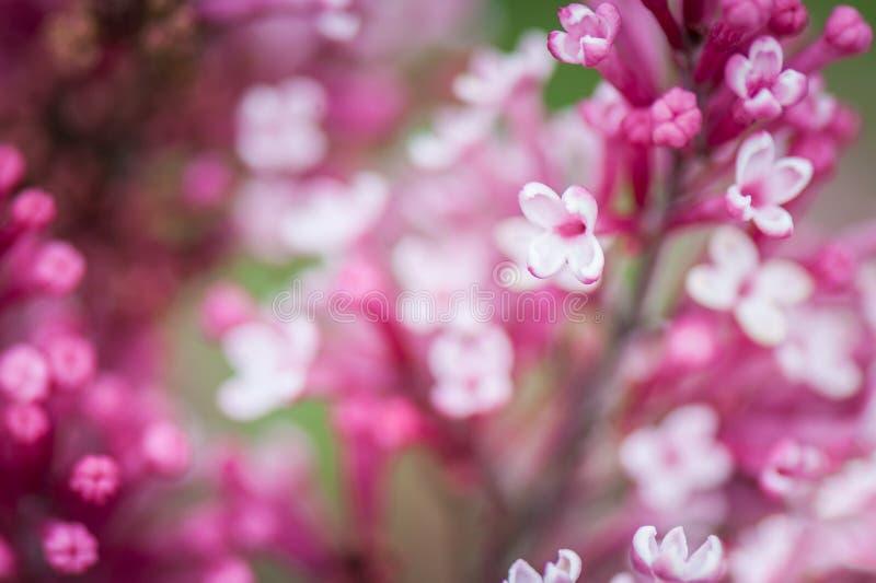 Abstrakt suddig bakgrund av att blomma lila blommor bakgrundsbanret blommar datalistor little rosa spiral arkivfoto
