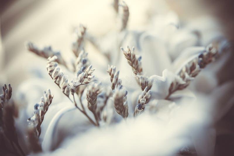 Abstrakt suddig blom- bakgrund stort vatten f?r fotografi f?r makro f?r droppgreenleaf Konst arkivbild