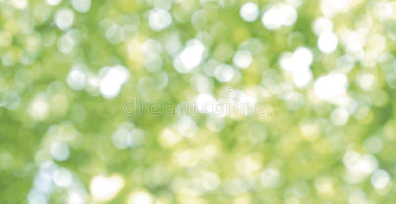 Abstrakt suddig ljus bokehnaturbakgrund av gröna sidor arkivbilder