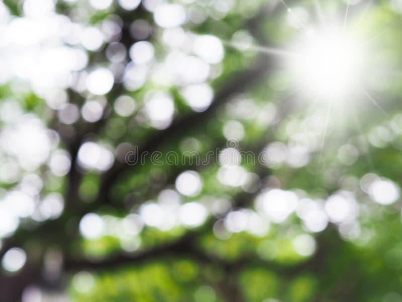 Abstrakt suddighetsbakgrund av det gröna trädet med solljus arkivfoto