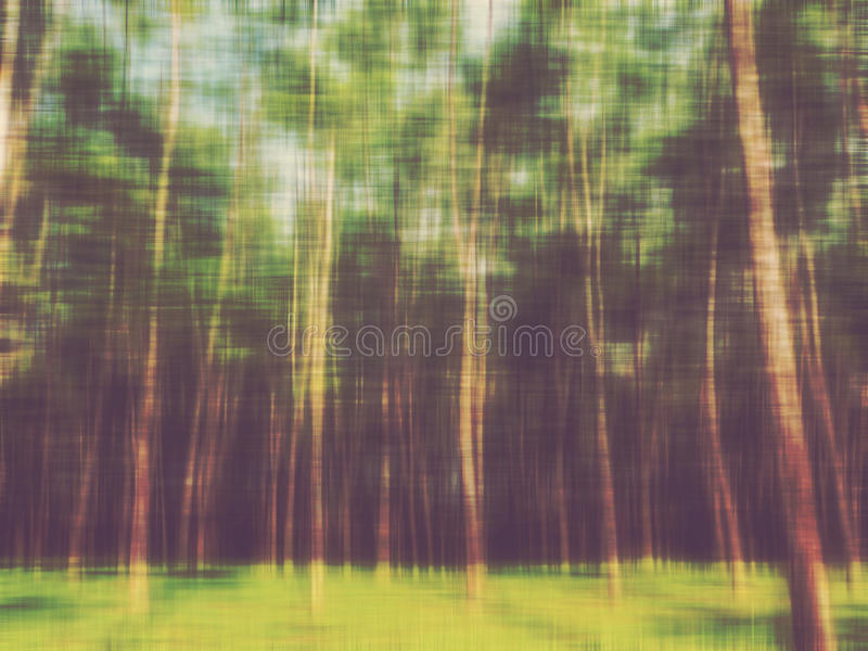 Abstrakt suddighetsskogbakgrund royaltyfria bilder