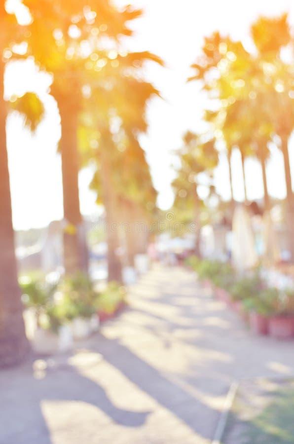 Abstrakt suddigt avbildar Strand för sommarnaturplats, himmel och kokosnötpalmträd royaltyfri foto