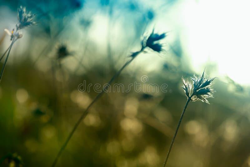 Abstrakt thistle fotografering för bildbyråer