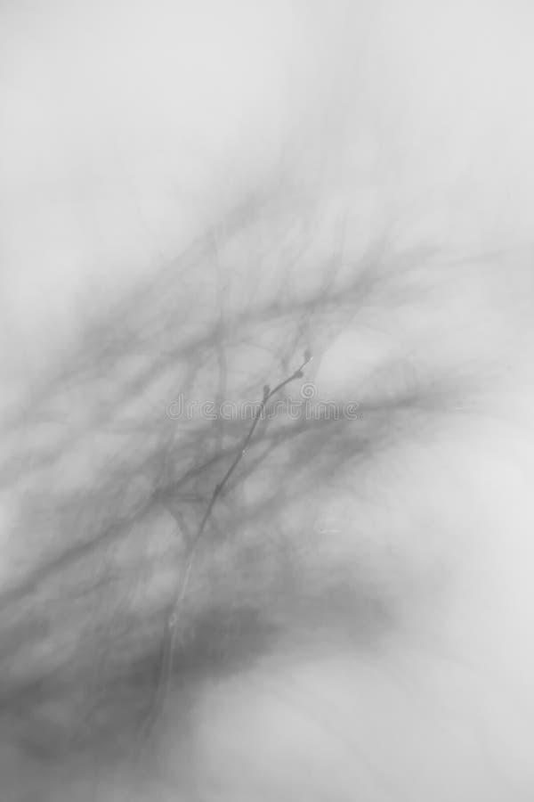 Abstrakt träd med fokusen på en blommande brance arkivbild