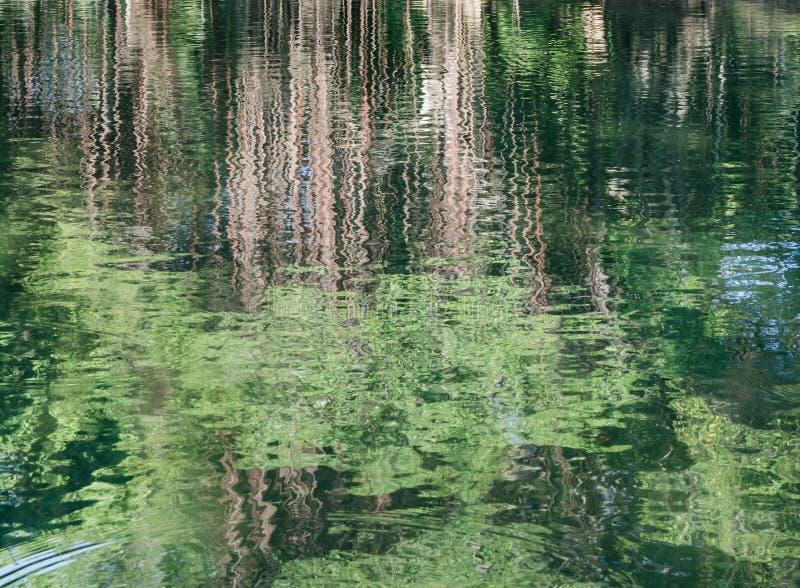 Abstrakt trädreflexion på vatten arkivbilder