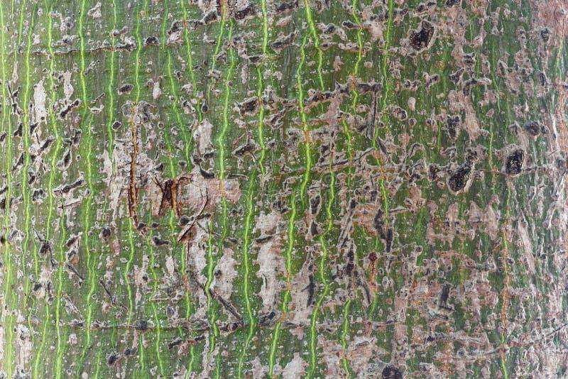 Download Abstrakt treeskäll arkivfoto. Bild av textur, alkyds - 27278610