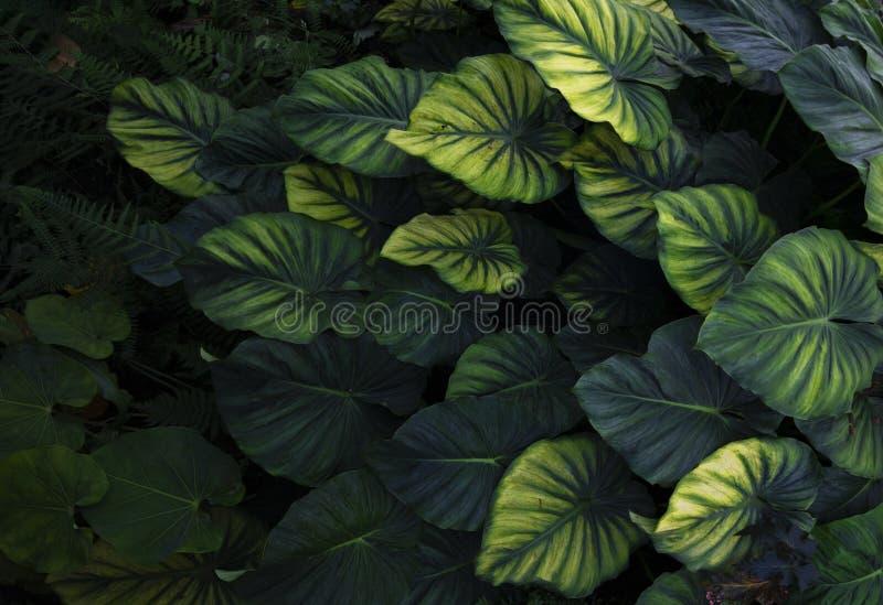 Abstrakt tropiskt blad f?r skogfreshmentgr?splan i djungeln arkivbilder