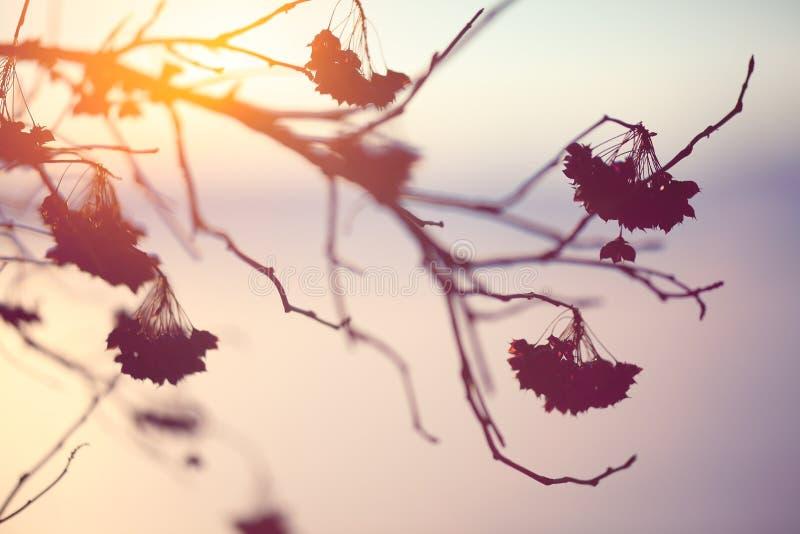 Abstrakt växtkontur på solnedgången royaltyfri bild