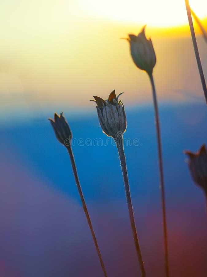 Abstrakt växtkontur på solnedgången arkivbilder