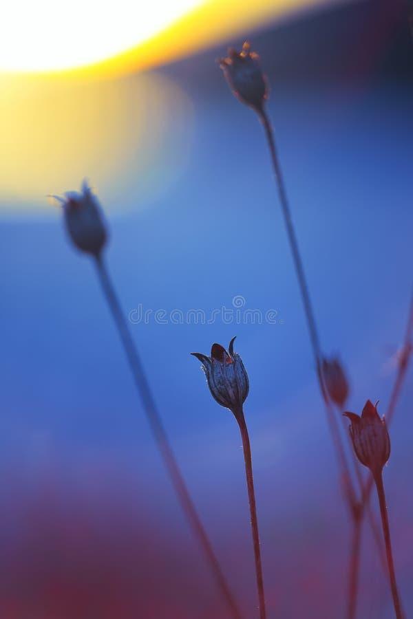 Abstrakt växtkontur på solnedgången arkivbild
