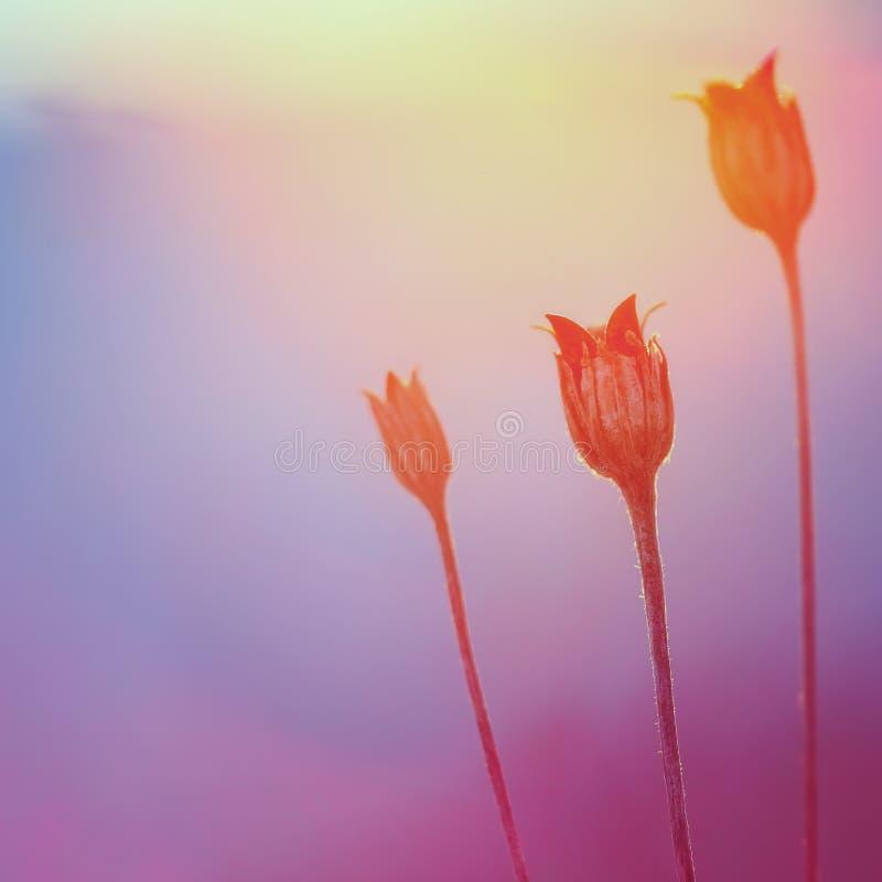 Abstrakt växtkontur på solnedgången arkivfoto