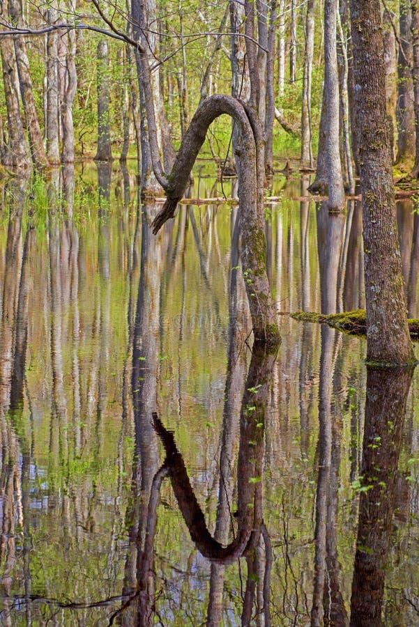 Abstrakt - Wasserreflexionen von Bäumen und von grünen Blättern stockfotografie