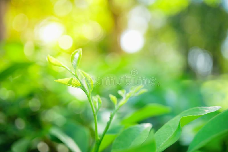 Abstrakt zamazywał zamkniętą up naturę zielony liść, naturalna zieleń pl fotografia royalty free