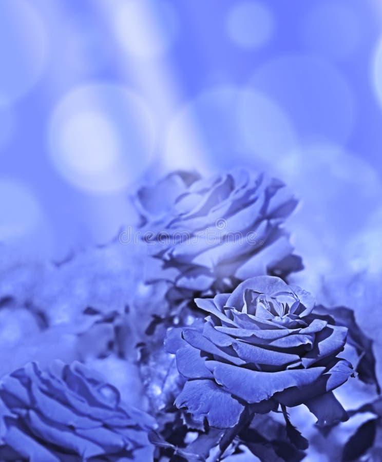 Abstrakta bakgrundsblåttrosor med solljus fotografering för bildbyråer