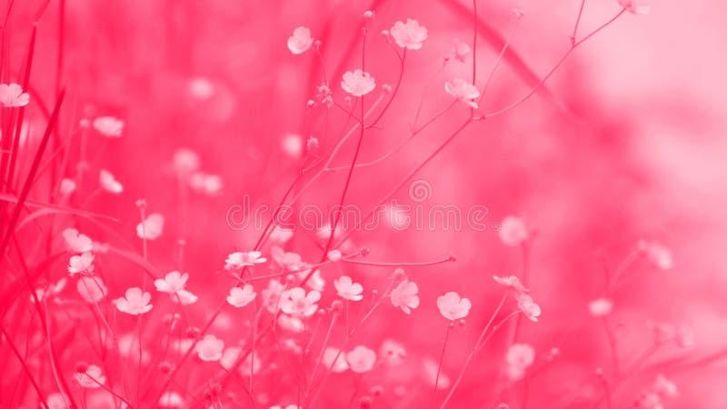 Abstrakta blommiga bakgrundsrosa färger arkivfoto