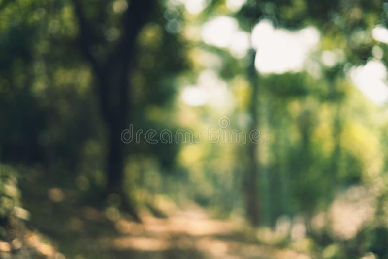 Abstrakta bokeh zielony tło w dżungli obraz stock