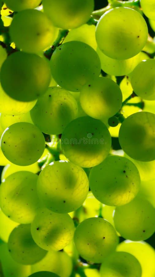 Abstrakta gröna druvor arkivbilder