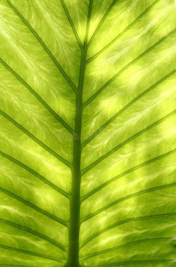 abstrakta liści zielony wzór obraz stock