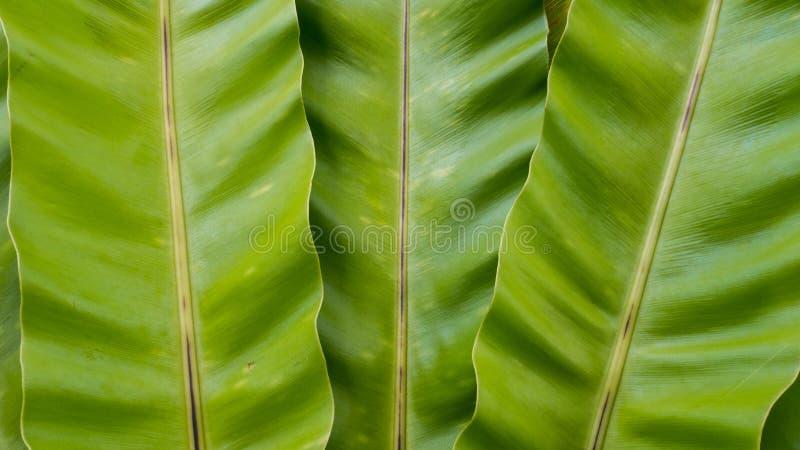 Abstrakta liścia tekstury zielony tło obrazy royalty free