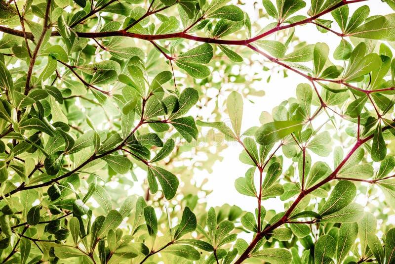 Abstrakta naturliga bakgrunder med solljus och bokeh royaltyfri fotografi