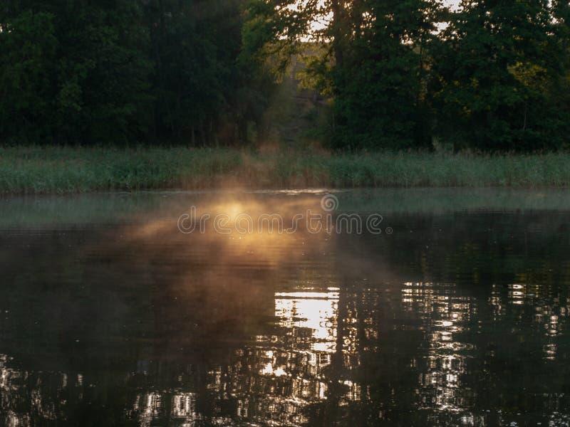 Abstrakta solstrålar häller till och med träd arkivfoto