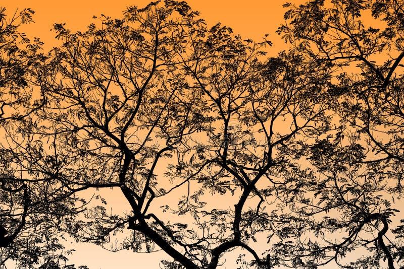 Abstrakta svarta trädfilialer på bakgrundsapelsinen, guling, guld- viktig royaltyfria bilder