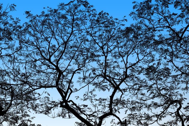 Abstrakta svarta trädfilialer på bakgrundsblått markerar royaltyfri fotografi
