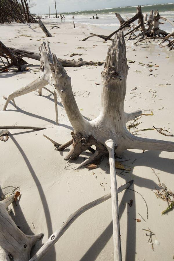 Abstrakta wzór bielący driftwood na plaży w Floryda fotografia stock