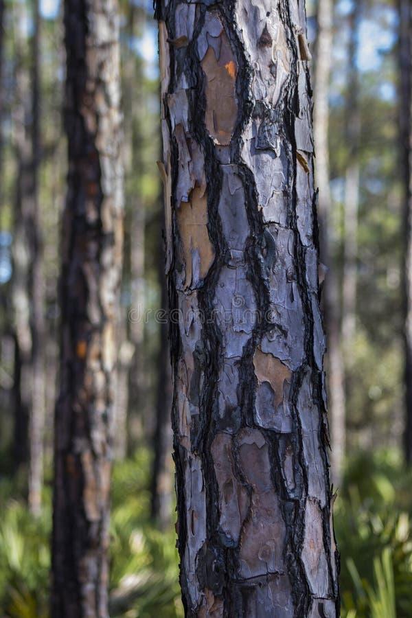 Abstrakta wzór Drzewna barkentyna zdjęcia stock