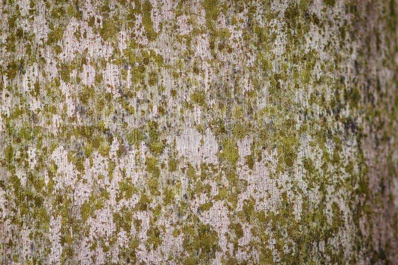 Abstrakte Beschaffenheit des Palmestammes mit moosigem Hintergrund stockfotografie
