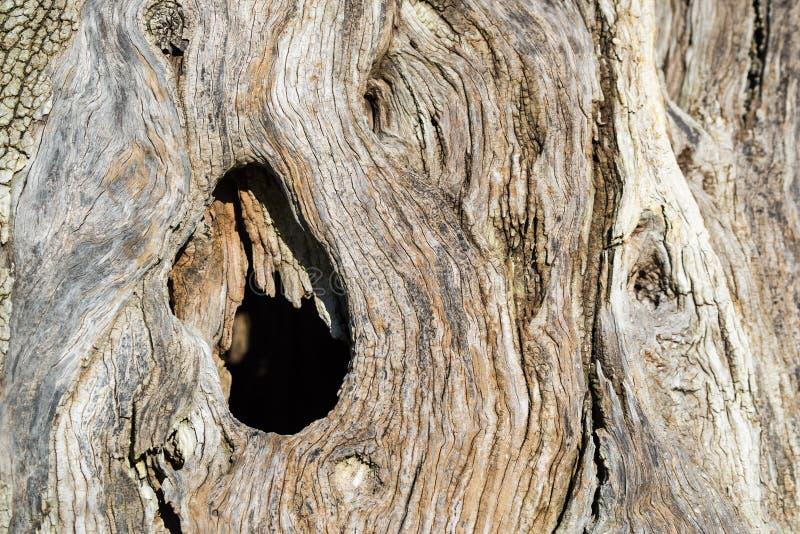 Abstrakte Beschaffenheit eines Stammes ein alter Olivenbaum stockbild