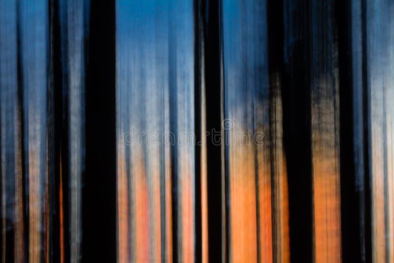 Abstrakte Bewegung unscharfe Bäume bei Sonnenuntergang lizenzfreies stockbild