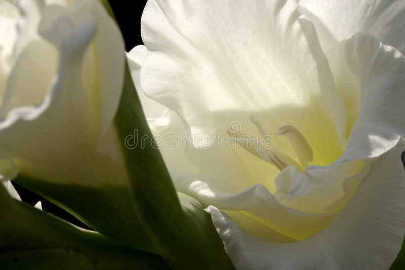 Abstrakte Blume 2 stockfotografie