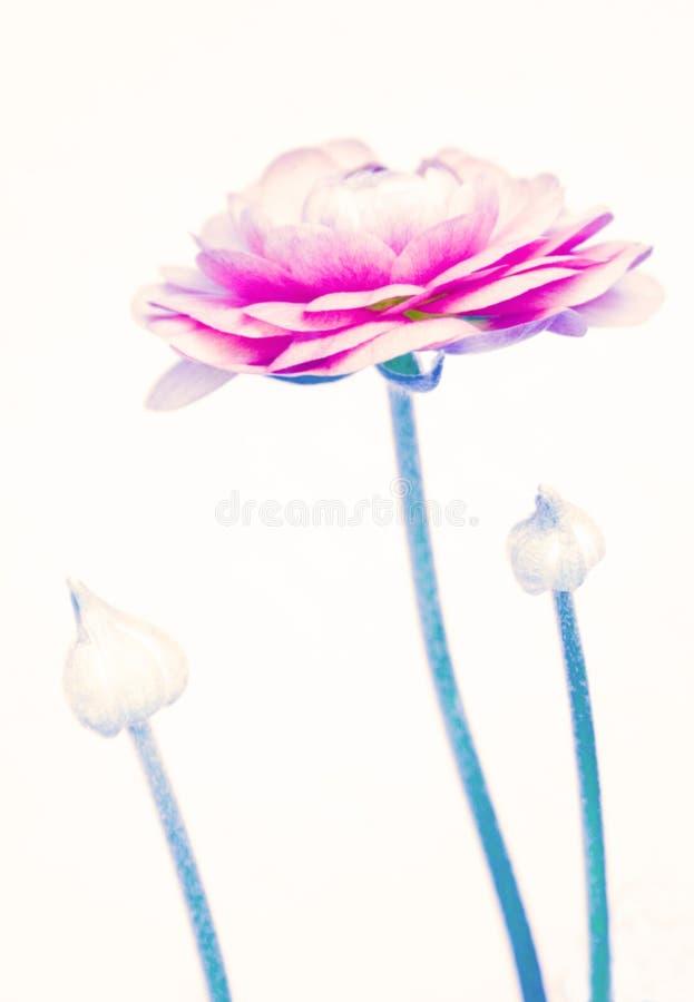 Abstrakte Blume und Knospen lizenzfreie stockfotos