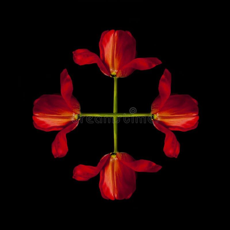 Abstrakte Blumen lizenzfreies stockbild
