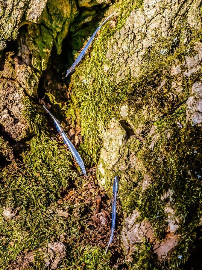 Abstrakte Federn auf einem moosigen Baumstamm lizenzfreie stockfotografie