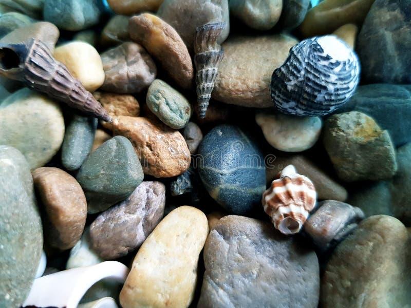 Abstrakte Kieselsteine und tote Schnecke lizenzfreie stockbilder